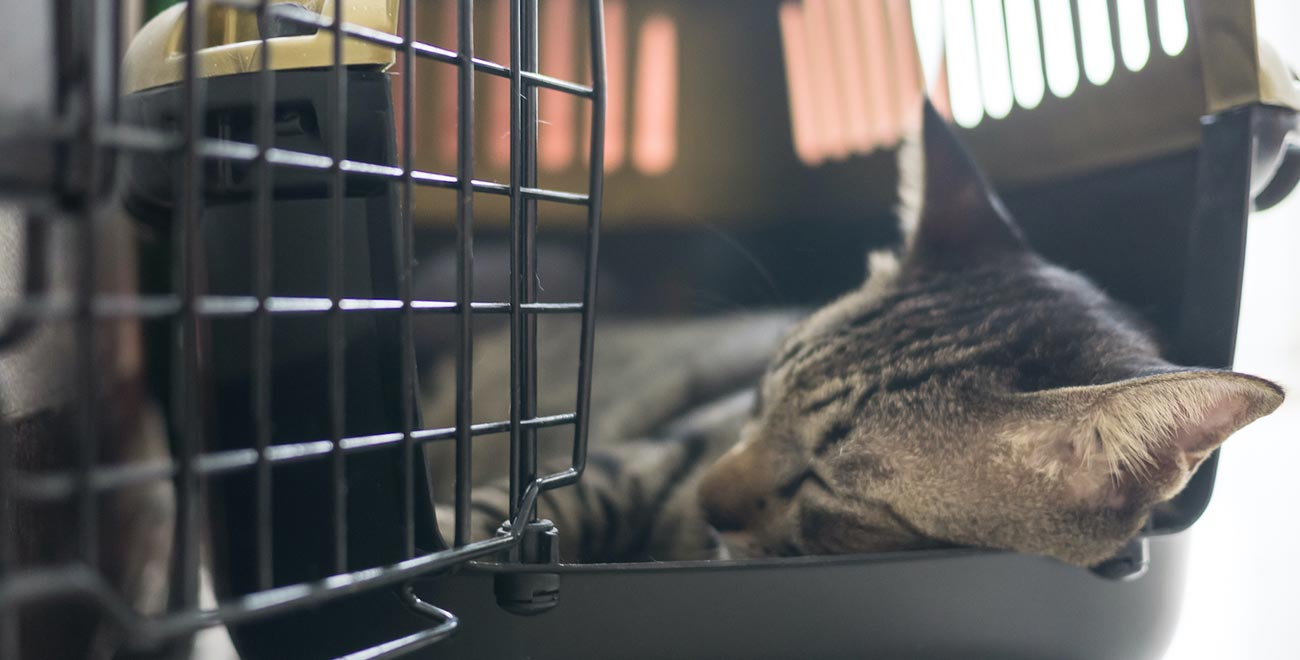 Pet in kennel box