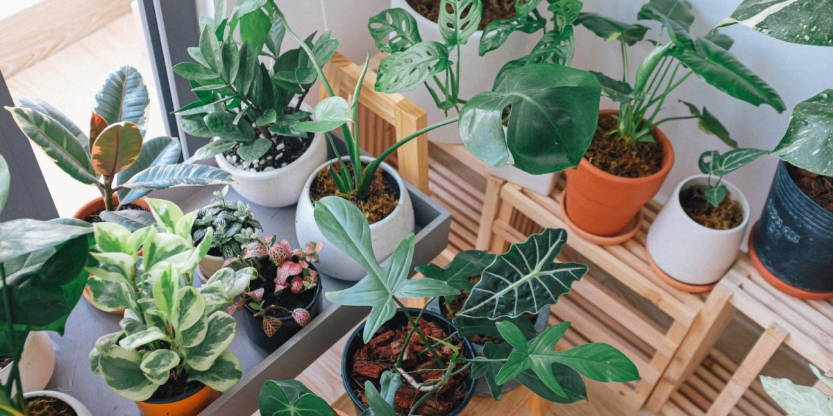 Tips On How to Move with Plants in Auckland