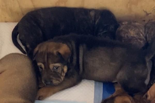 2 month puppy